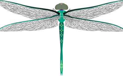 Dragonfly Symbolism and Meaning
